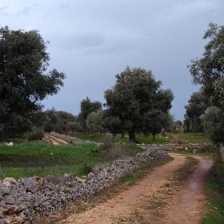 Strada Vicinale
