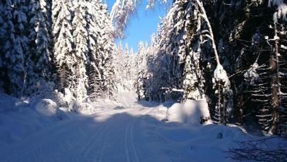 In Nordmarka is much more snow than in the city of Oslo