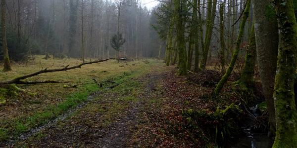 """0600 Bei einer der wenigen Waldlichtungen   47°22'09.5""""N 8°01'37.7""""E"""