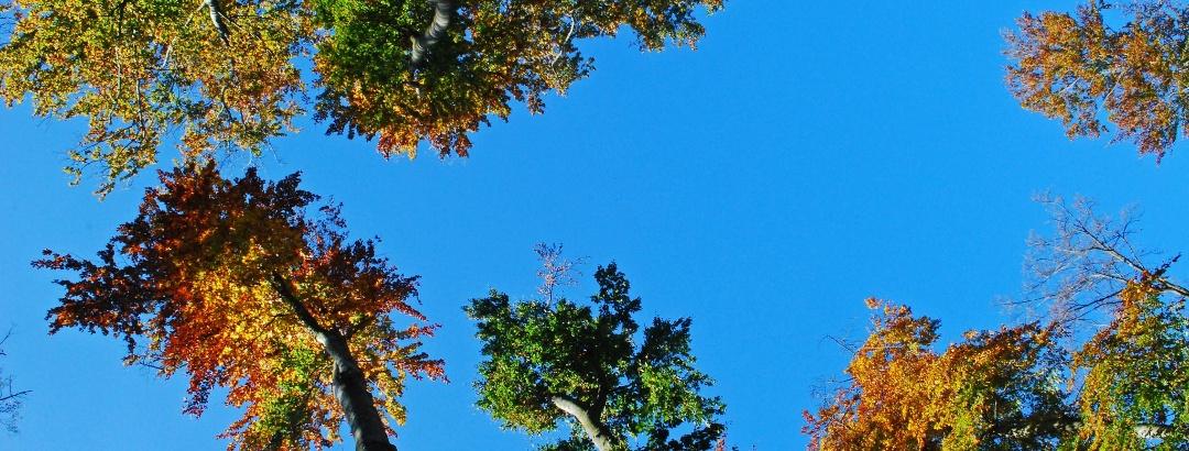 Herbst am Sonnberg