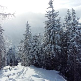 Am Gipfel des Zinkenkogels