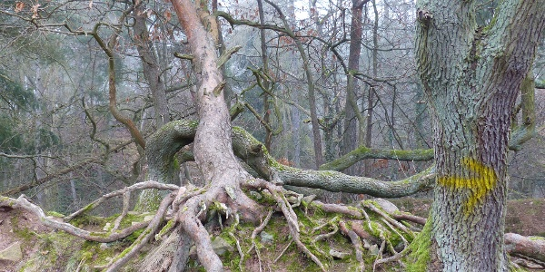 Stadtwald Bad Kreuznach