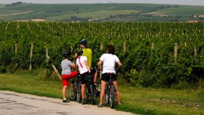 Radeln durch die Weingärten