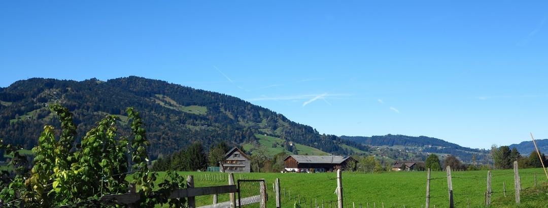 Die Landschaft bei Lingenau.