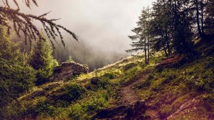 Wanderweg im Landschaftspark Binntal