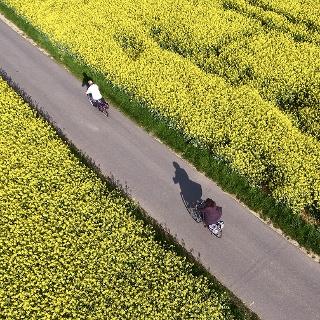Radfahrer entlang eines Rapsfeldes im Lieblichen Tauebrtal