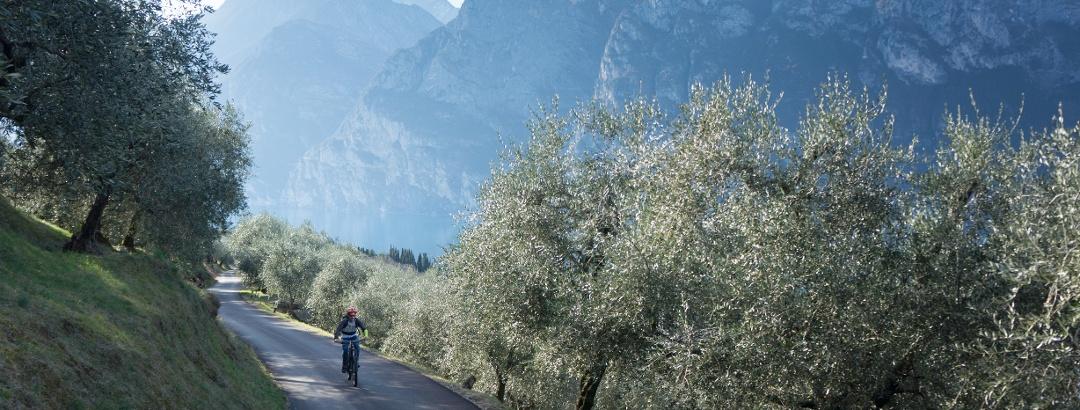 La salita sul Brione fra gli olivi col Garda sullo sfondo