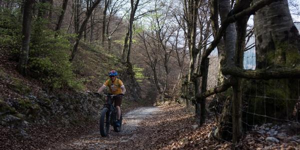 I boschi verso Gorghi