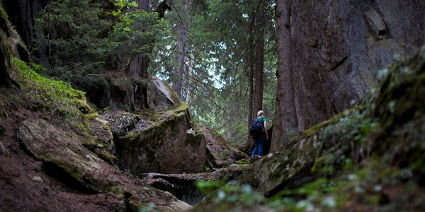 Waldabschnitt auf dem ersten Teil der Wanderung