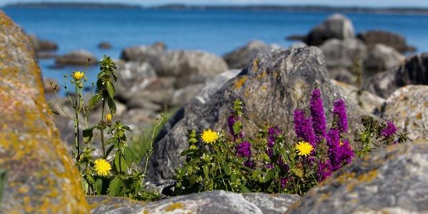 Kvarken Archipelago UNESCO World Heritage