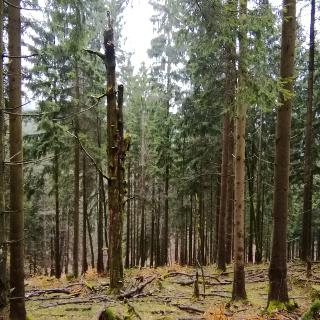 Wertvolles Totholz im Wald