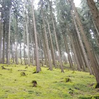 Mosbedeckter Waldboden im Thüringer Wald