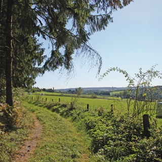 Zwischen Wald und Wiese am Heisternbusch