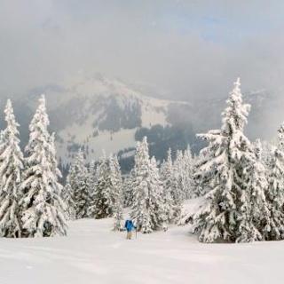 Aufstieg Gscheideggkogel Nordseite