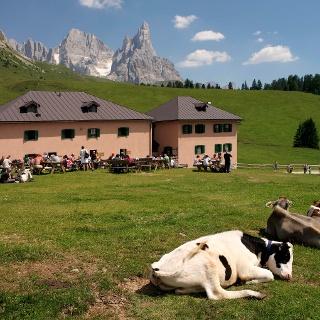 Iuribello Dairy