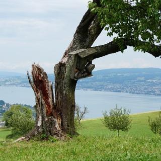 Totholz als wertvolles Strukturelement