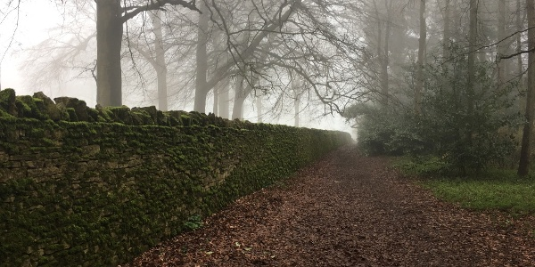 A mossy wall leads the way