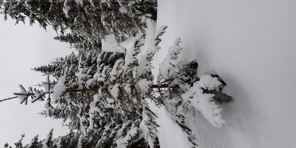 Schnee genug im März 2018