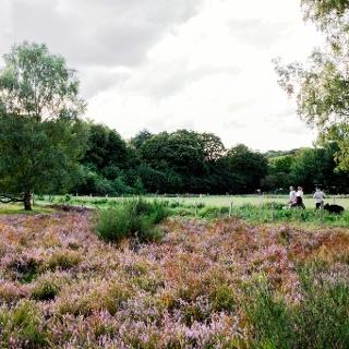 Hildener Heide