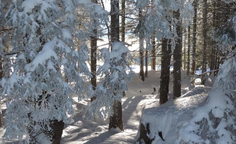Verschneiter Wald auf dem Arni