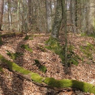 Hohlweg am Schneckenberg
