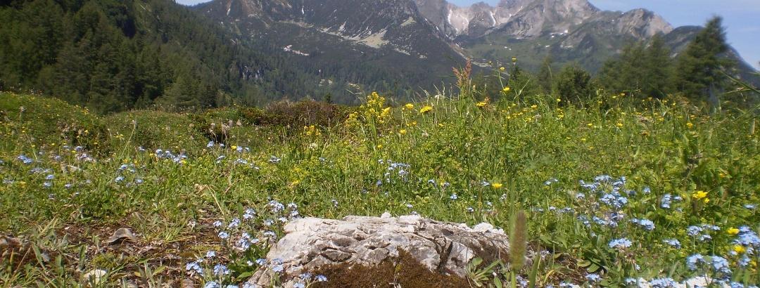Hirschwandsteig Richtung Südwienerhütte