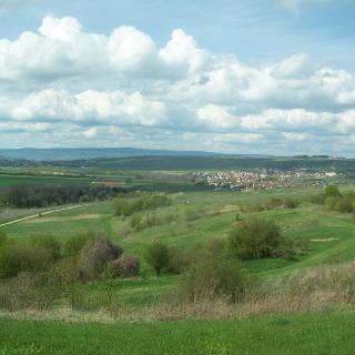 Rheinhessische Landschaft