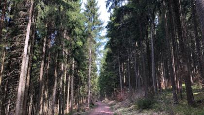 Forstweg im Bregtal