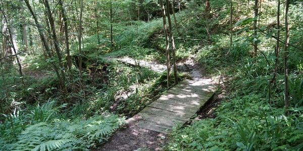 Der Weg führt durch abwechslungsreiche Waldabschnitte