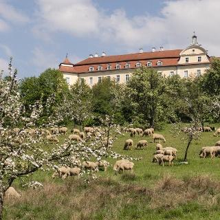 Streuobstwiesen mit Schafen im NSG Ellwanger Schlossweiher