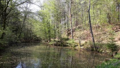 Barbarossa-Radweg im Stumpfwald