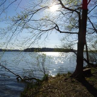 Ostufer Stechlinsee