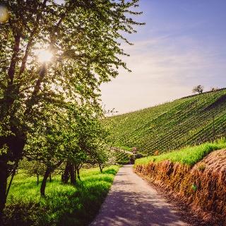 Idylle auf dem Weinwanderweg