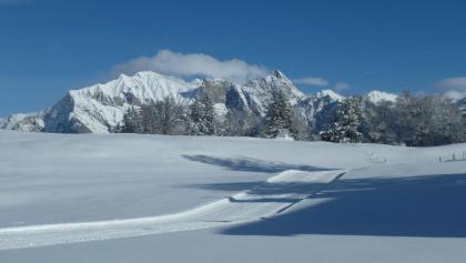 Langlaufloipe mit dem verschneiten Falknis im Hintergrund
