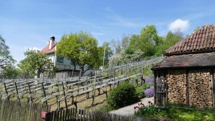 Rebgarten am Rauenegg