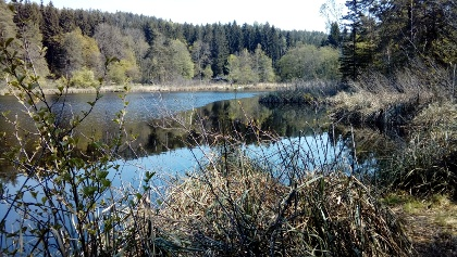 Techelsdorfer See / Kleinsee / Kleiner Forstsee - mit Blick nach Nordosten