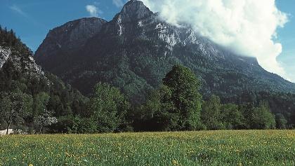 Großer Weitschartenkopf