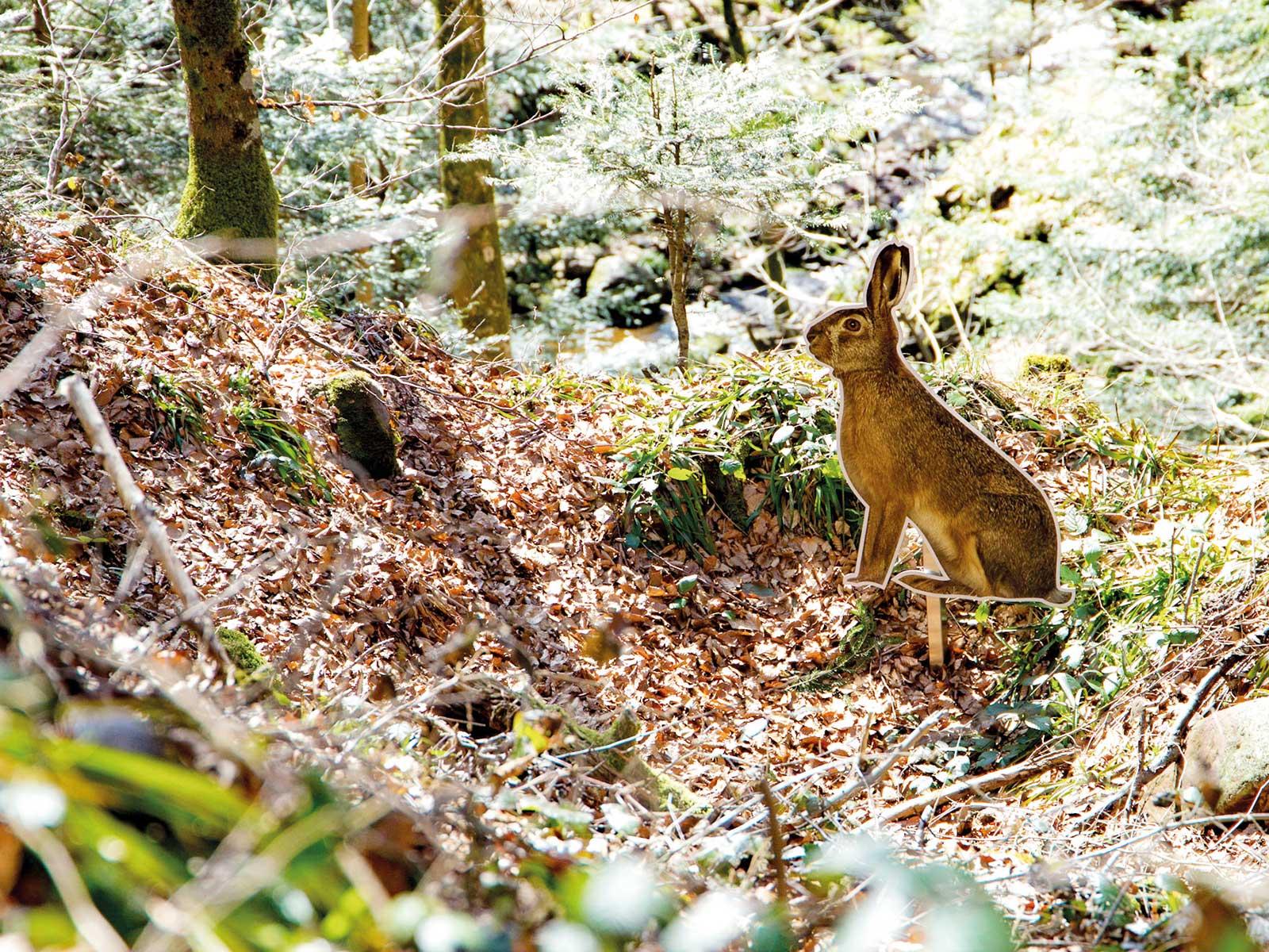 Waldbewohner aufspüren - auf dem Pirschpfad in Bad Peterstal-Griesbach