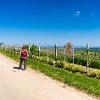 Weinlehrpfad bei Bechtheim