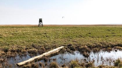 Moor am Großen Jasmunder Bodden mit Hochstand und Kitesurfer.