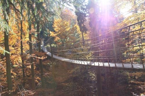 ÖPNV-Tour: Auf dem Rothaarsteig von Hoheleye nach Bad Berleburg