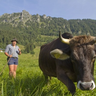 Jungholz Sorg Alpen