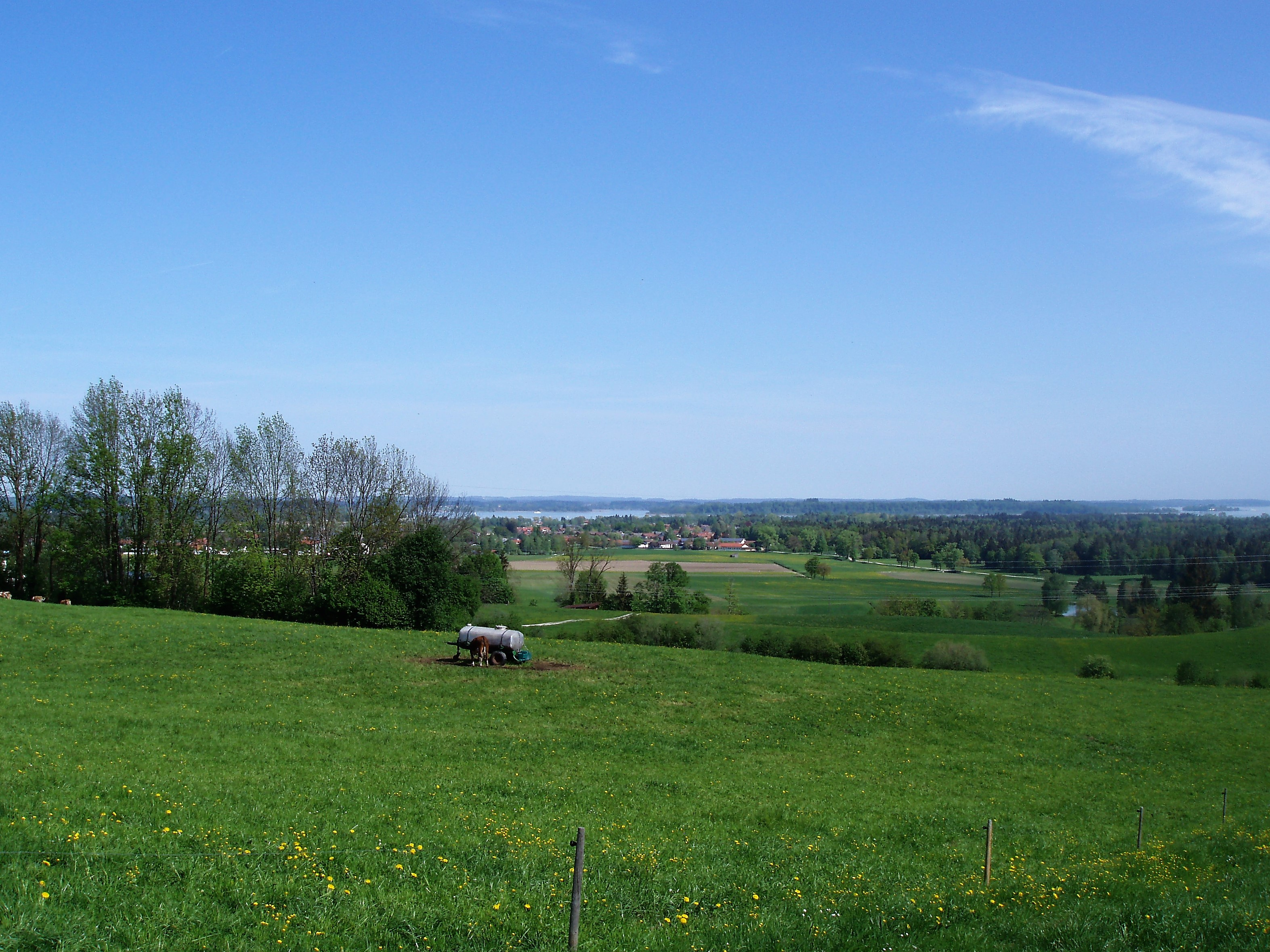 Blick auf das Bernauer Hochmoor