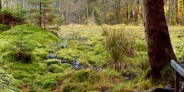 Grünheider Hochmoor