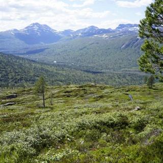 Abstieg vom Bollen; am Ende des Tales liegt linkerhand Vindølbu