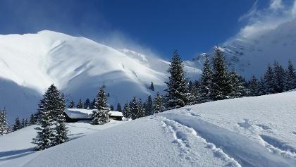 Bichlbächler Alpe (1600 m)