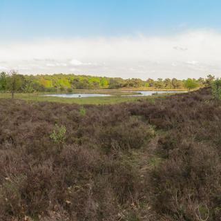 Panorama Nationaal Park Maasduinen