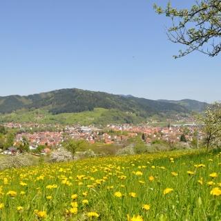 Panoramablick vom