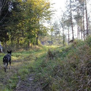 Kleeblattwanderweg Nr. 2 - auch mit Hund!
