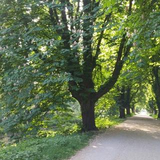 Fietsallee am Nordkanal im Neusser Stadtwald